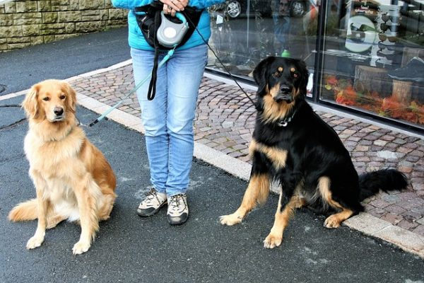 Do I Have To Keep My Dog On A Leash? When and Where To Clip