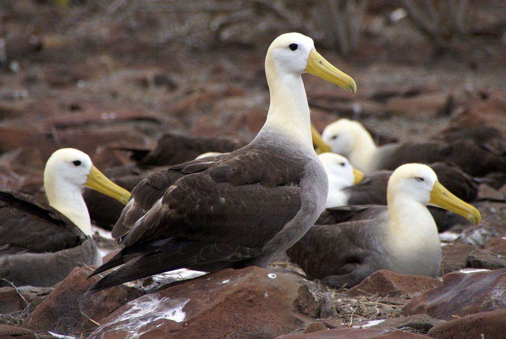 Escaping Snowpocalypse, Planning A Winter Galapagos Getaway