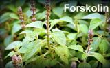 The Beginner's Guide to Forskolin Supplementation
