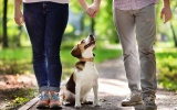 Planning To Adopt A Beagle? Here's What You Need To Know