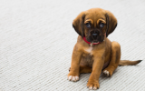 4 Tips for Getting Tough Pet Stains out of Your Carpet