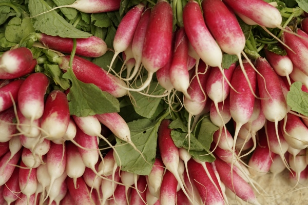 4 Tips For Growing Large Radish Crops