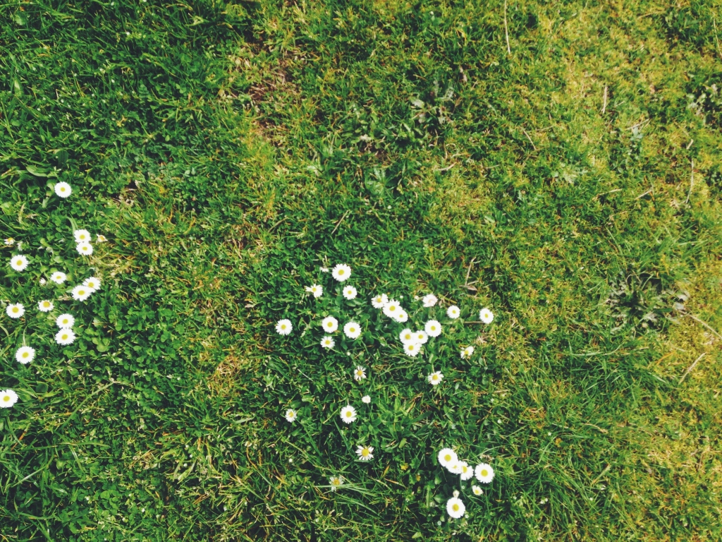 4 Ways To Cultivate A Green Lawn During A Drought
